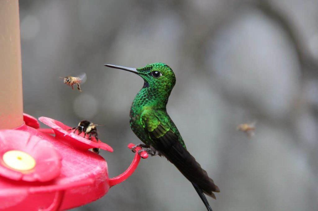 Best Hummingbird Feeders