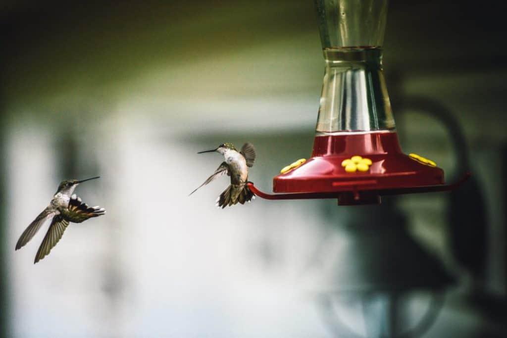 Best Hummingbird Feeders Buying Guide