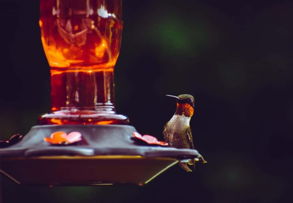 The Best Humingbird Feeders For The Money