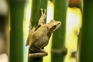 How To Get Rid Of Frogs In Your Garden