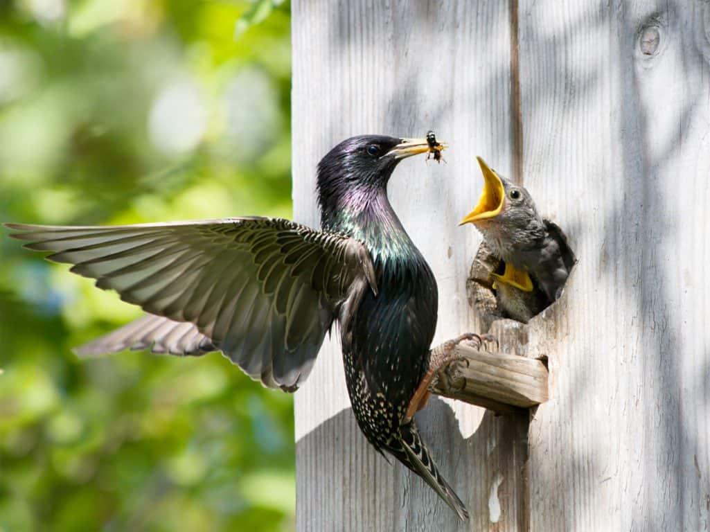 catching injured wild bird