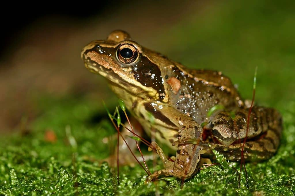 removing frogs sustainably