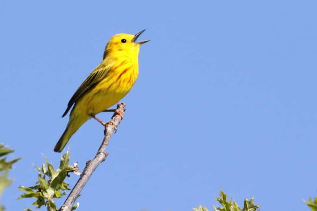 Wild birds catching methods