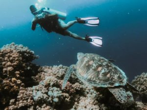 The Ultimate Beginner's Guide to Scuba Diving and Snorkelling