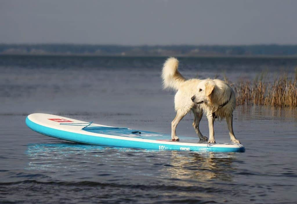 10 Easy Steps to Train Your Dog When You Paddleboard