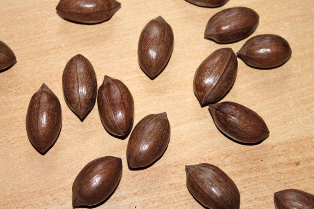 Baru Nuts