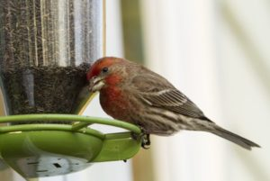 The Nature Lover's Guide to the 24 Types of Bird Feeders
